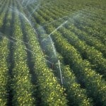 Sanctions won't be Effective if Iran Reaches Agricultural Self-Sufficiency